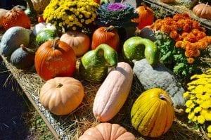 Halloween orto botanico Bergamo