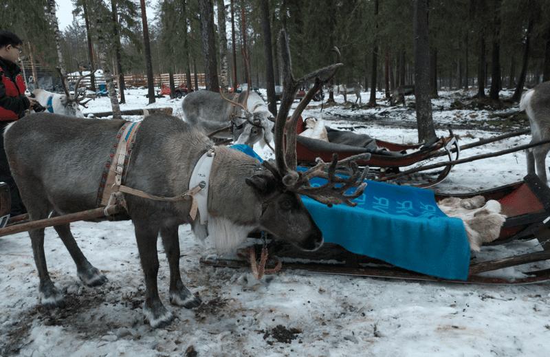 Gita in Slitta con le renne