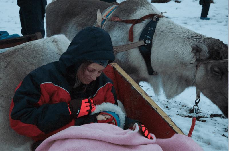 Rovaniemi slitta renne