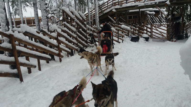 La casa di Babbo Natale in Lapponia slitta con i cani