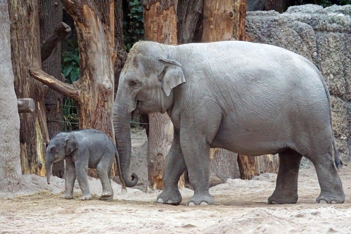 elefanti zoo zurigo