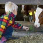 bambino mucca