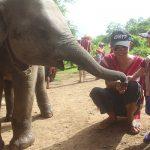 thailandia con i bambini elefanti