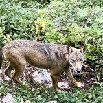 museo del lupo parco abruzzo