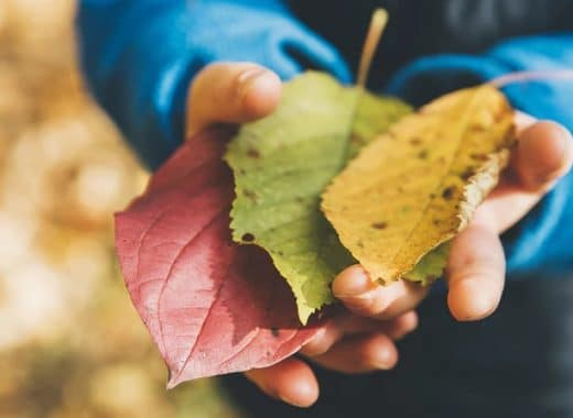 Bologna con i bambini autunno