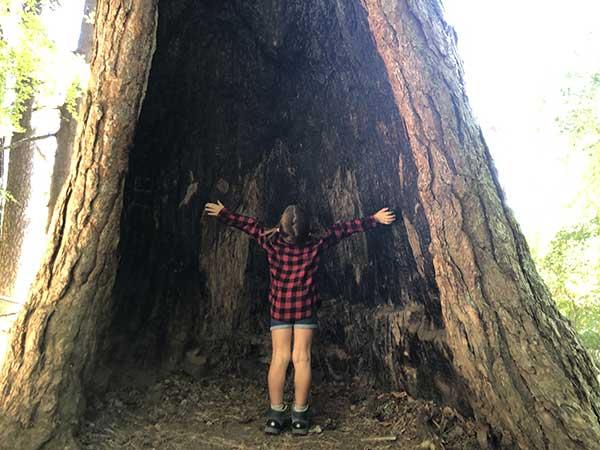 bimba albero