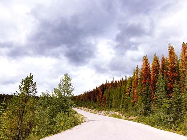 canada autunno