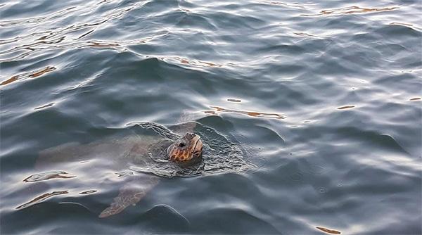 cefalonia isola tartarughe