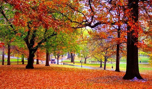 foliage parchi in città