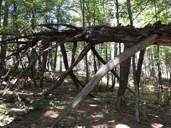 pino riserva biogenetica