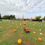 giardino zucche halloween