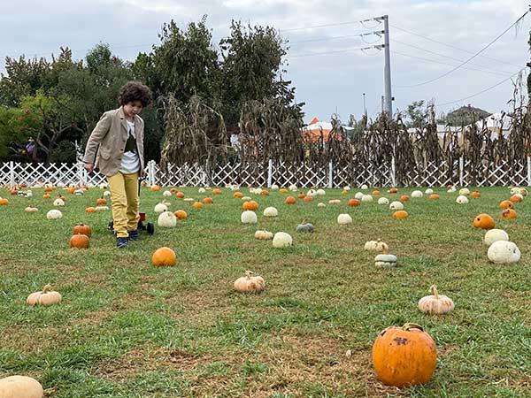 giardino zucche pignataro