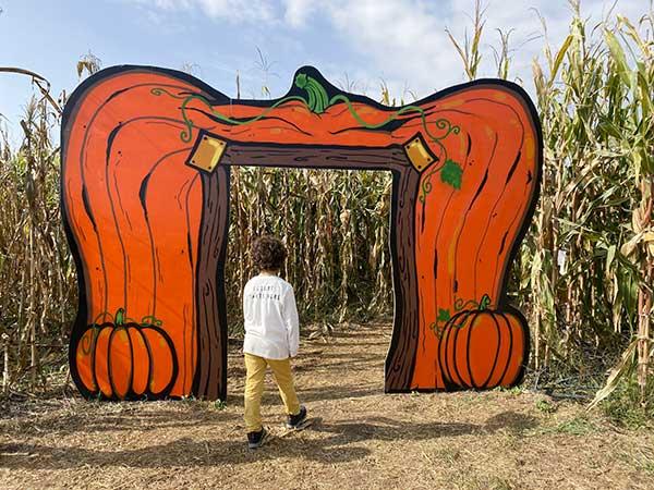 labirinto zucche
