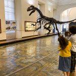 scheletro dinosauro e bambini che lo guardano