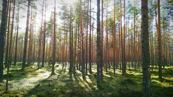 paesi baltici natura