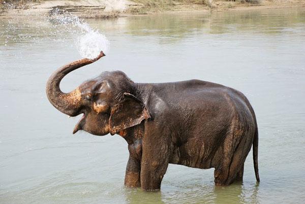 elefantino gioca con l'acqua