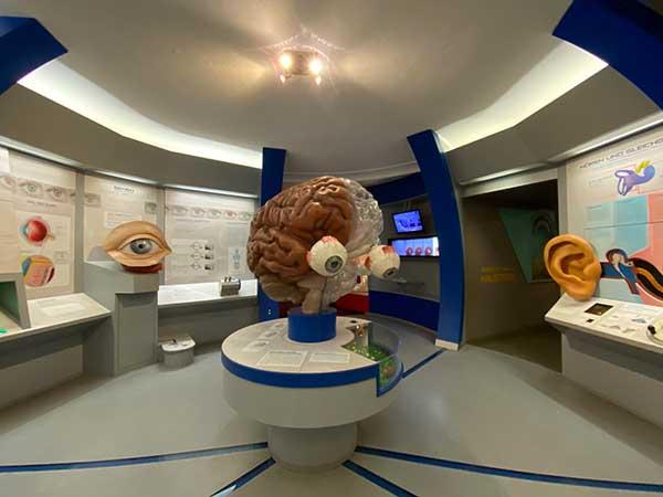 Salisbrugo musei bambini museo natura scienza vcervello