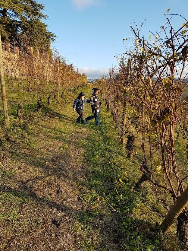 bambini campi di uva nelle langhe