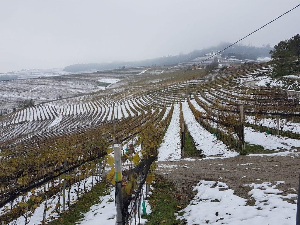 langhe campi con la neve