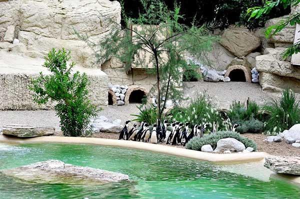 pinguini allo zoo