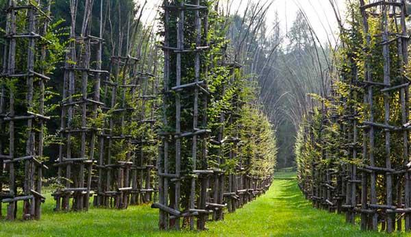 cattedrale di alberi
