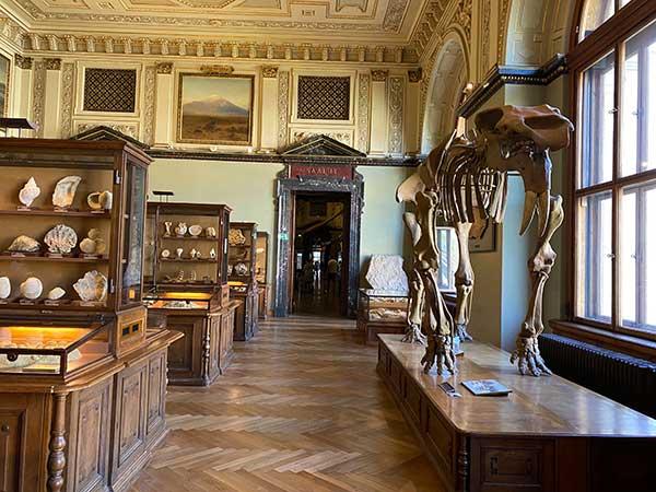 Museo di Storia Naturale di Viennascheletri