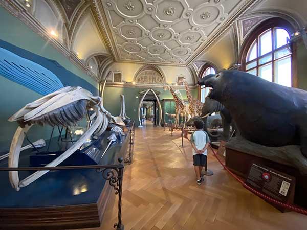 Museo di Storia Naturale di Vienna bambino passeggia