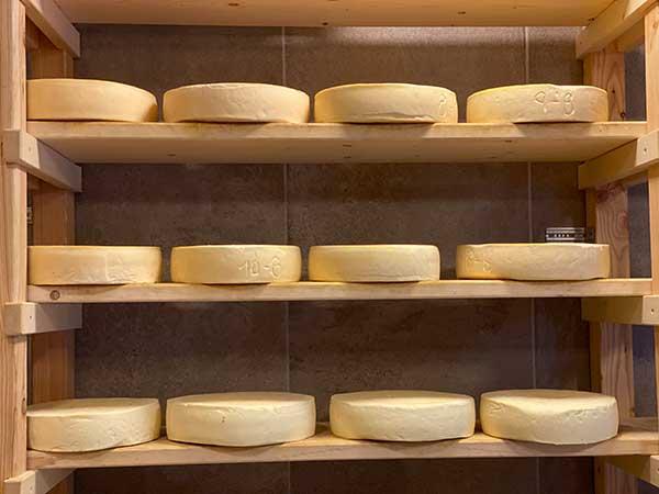 forme di formaggio fresco