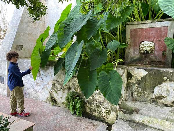 giardini di minerva