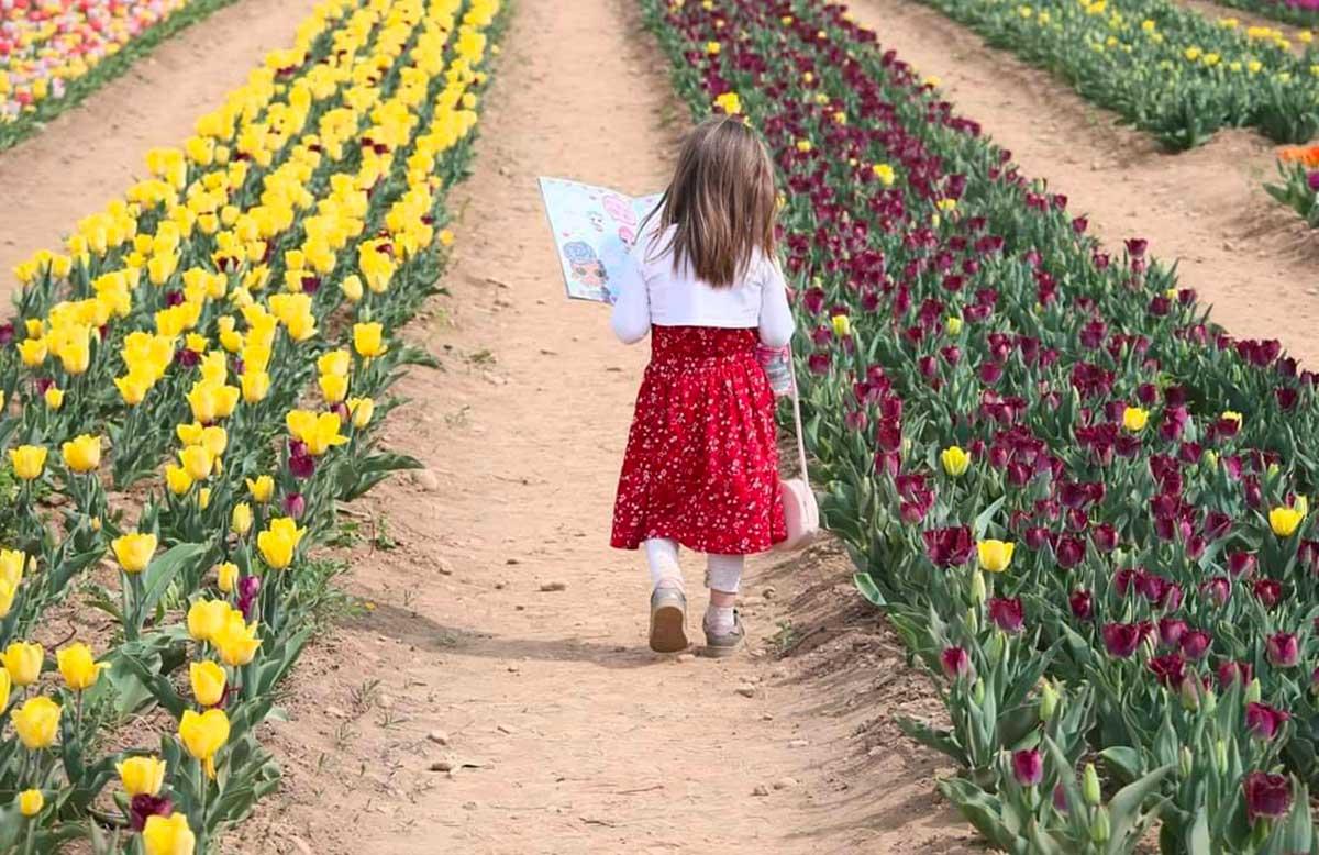 bambina campi tulipani
